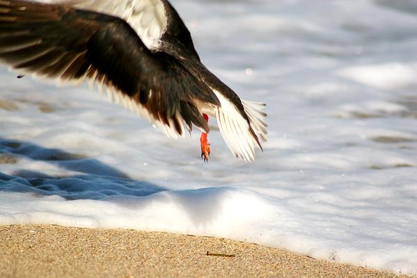 Seagulls(edit)_0033