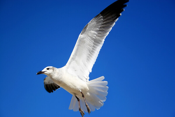 Seagulls(edit)_0068