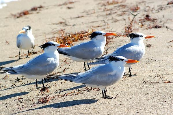 Seagulls(edit)_0052