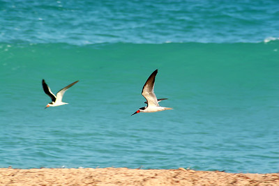 Seagulls(edit)_0054
