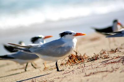 Seagulls(edit)_0047