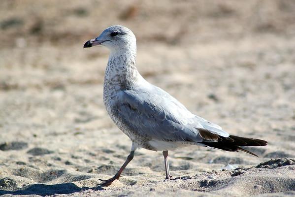 Seagulls(edit)_0025