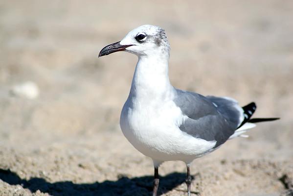 Seagulls(edit)_0022