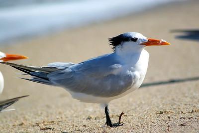 Seagulls(edit)_0043