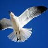 Seagulls(edit)_0065