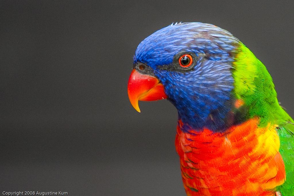 Birds-2342