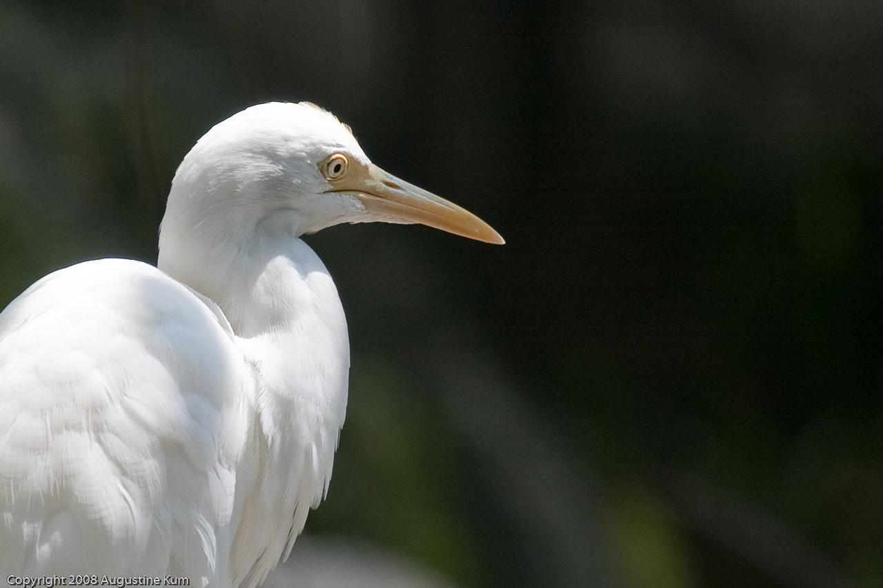 Birds-2293