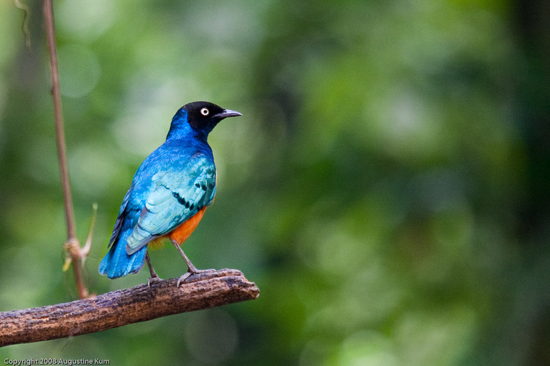 Birds-2443