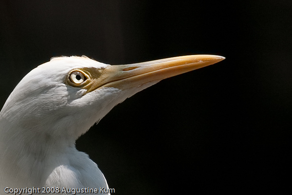 Birds-2294