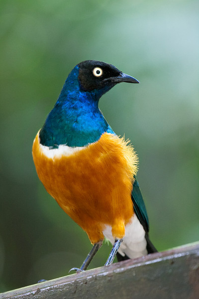 Birds-2464