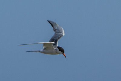 What Tern?
