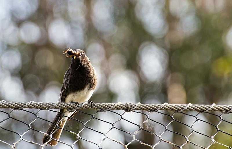 Bird captures bug