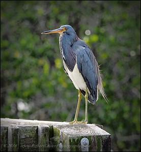 2016-03-02_P3021115_Wall Springs Park,Palm Harbor,Fl