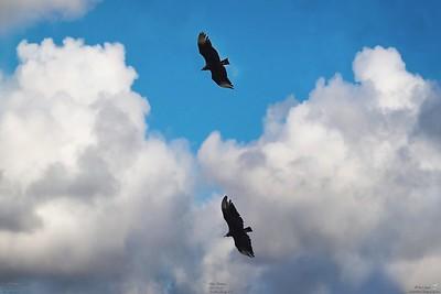008_vultures_2021-06-04