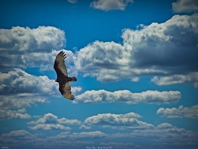 rx10_008_vulture
