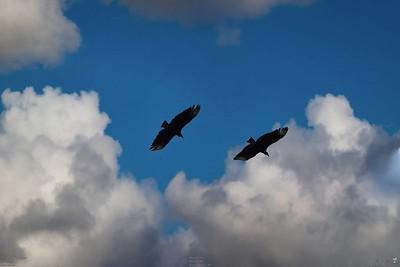 012_vultures_2021-06-04