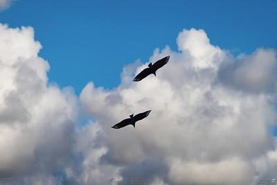 013_vultures_2021-06-04