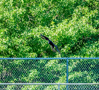 2019-01-19_40x150,pmode, Dogs in Paradise,Black Vulture_12