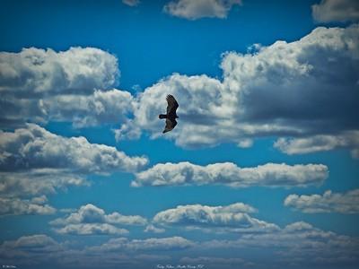 rx10_011_vulture