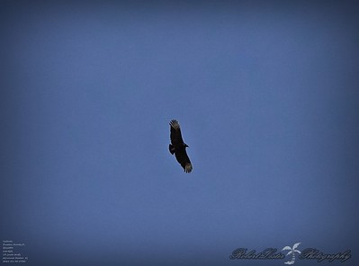 Vultures 2021-01-30 By RX10M4 Pmode