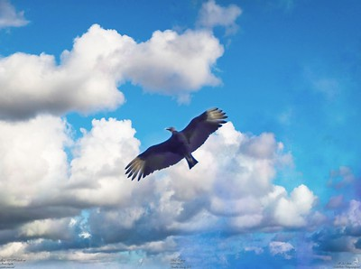 002_vultures_2021-06-04