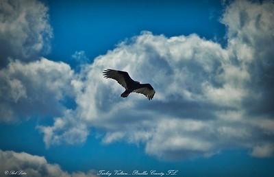 rx10_010_vulture