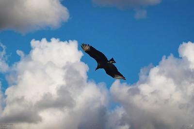 007_vultures_2021-06-04