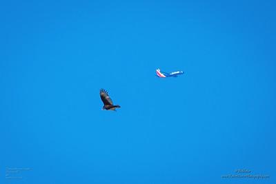 P1390301_ vulture,aircraft