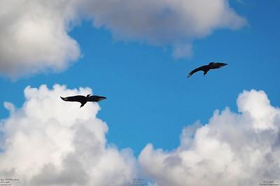 014_vultures_2021-06-04