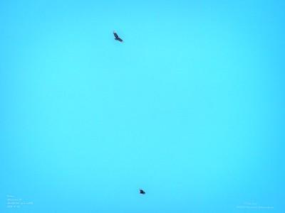 _B070007_ vulture_ detailednr0