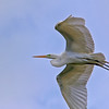 Nature Photographer Jerry Dalrymple shares images of wading birds. This is a great egret in the Okefenokee swamp..