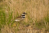 Kildeer, Lawrence County, Missouri