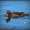 2016-02-23_P2230742_Eagle Lake County Park,Largo,Fl