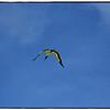 Eagle Lake Cnty  Park Aug 19 2011_00136