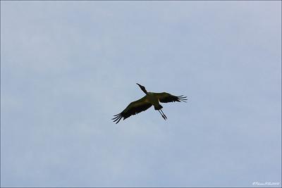 Eagle Lake Cnty  Park Aug 19 2011_00132