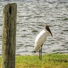 2017-10-08_PA085783_Clam Bayou Nature Park,Gulfport,Fl