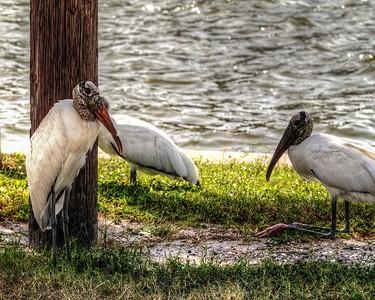 2017-10-08_PA085743_Clam Bayou Nature Park,Gulfport,Fl