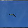 Eagle Lake Cnty  Park Aug 19 2011_00138
