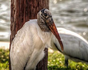2017-10-08_PA085742_Clam Bayou Nature Park,Gulfport,Fl