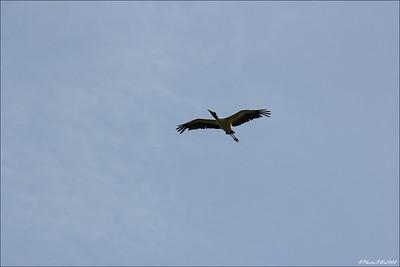 Eagle Lake Cnty  Park Aug 19 2011_00130
