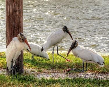 2017-10-08_PA085756_Clam Bayou Nature Park,Gulfport,Fl