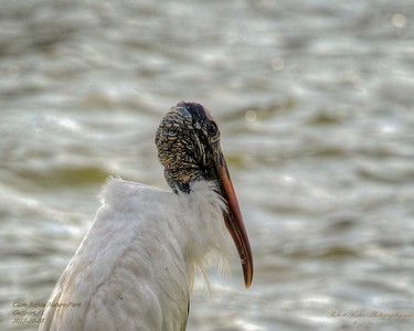 2017-10-08_PA085769_Clam Bayou Nature Park,Gulfport,Fl