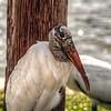 2017-10-08_PA085739_Clam Bayou Nature Park,Gulfport,Fl