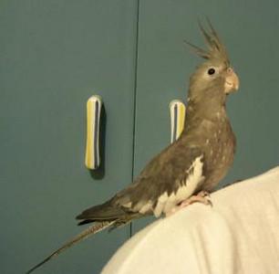 20040118-TweetieBird18