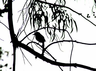 4539 Bird Silhouette