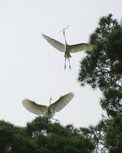 4500 Egrets