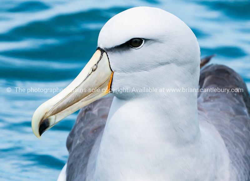 New Zealand coastal seabird