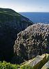 Main nesting sea mount Cape St Mary's