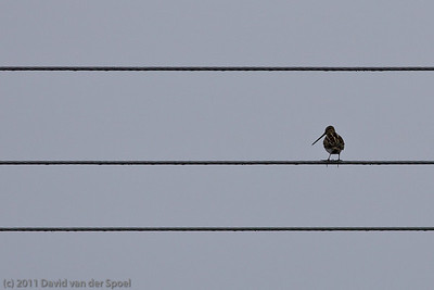 Staaldraden - Steel wires