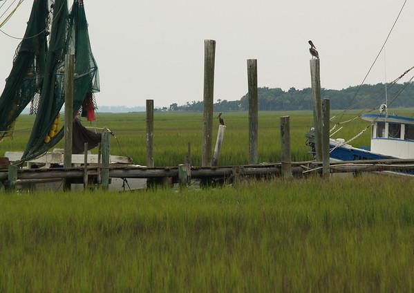 Shrimp boats & pelicans near Hunting Island, South Carolina